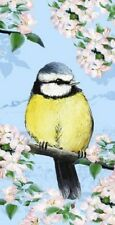 Summer Blossom Blue Tit Bird blank greeting birthday card Pollyanna Pickering