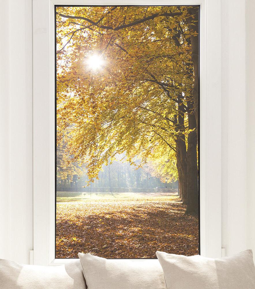 Ventana de Otoño lámina otoño bosque árbol privacidad imagen de ventana Lámina de calidad