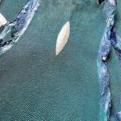 Stingray Fish Tail Skin Hide Pelt Scrap Polished Stingray Shagreen Skin Leather