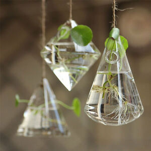 Wall Glass Terrarium Hydroponic Plant Flower Clear Hanging Vase Home