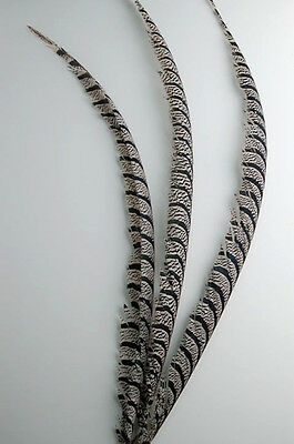 """3 Pcs LADY AMHERST PHEASANT Feathers 30-40"""" CENTERS! Top Quality! Hats/Costumes"""