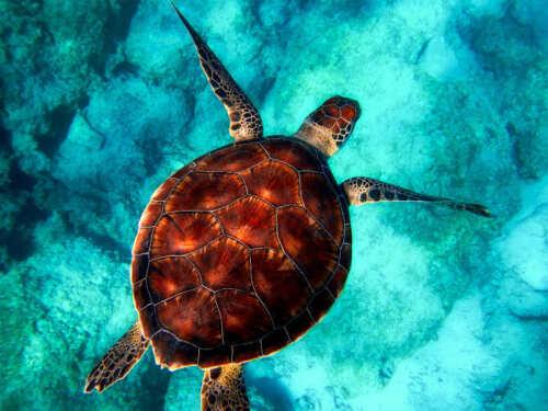 SEA TURTLE ANIMAL WILDLIFE POSTER PRINT STYLE C 18x24 HI RES 9 MIL PAPER