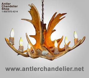 REAL ANTLER MOOSE CHANDELIER, RUSTIC LIGHTING, DEER LAMPS ONE TIER