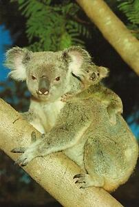 KOALA-BEAR-with-BABY-KOALA-POSTCARD-PRE-STAMPED-Australia-Post-Series-III-22c