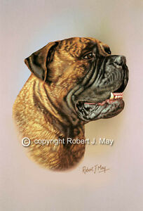 Bullmastiff-Print-by-Robert-J-May