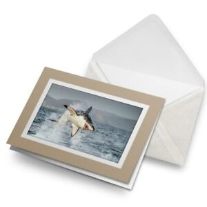 Greetings-Card-Biege-Great-White-Shark-Hunting-Breach-21644