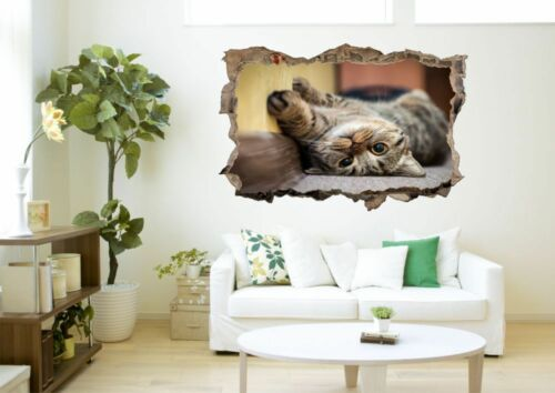 Chat Animal Animal de compagnie Mural Sticker Autocollant d1319