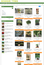 Fully Stocked Bonsai Website Home Business Easy To Run 1 Year Hosting