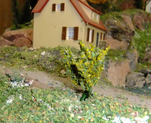 Gelb bringt Licht in die Landschaft 8 herrliche gelbblühende Sträucher