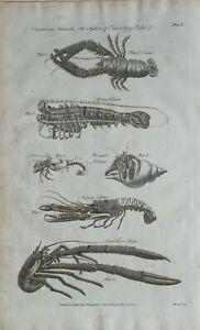 1790-Datierter-Aufdruck-Crustaceous-Tiere-System-von-Entomologie-Hummer-Hermit