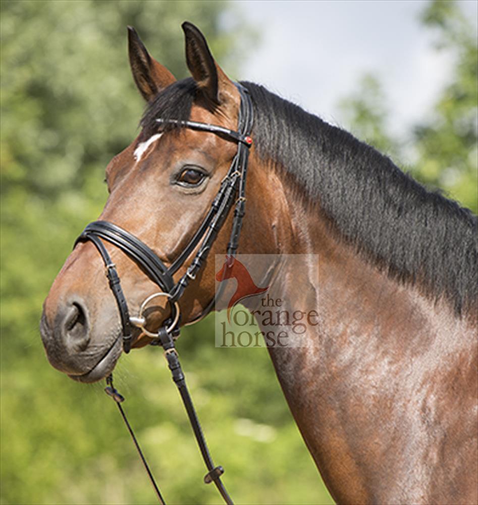 Kieffer Snaffle Yaruna - English Riding Halter