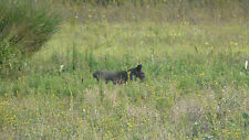 Texas Hog hunting for 2 hunters 110 miles south west of Fort Worth MAKE OFFER