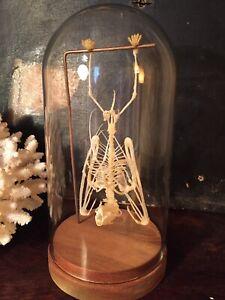 Veritable-Squelette-De-Chauve-Souris-Globe-Petit-Modele-cabinet-de-curiosite
