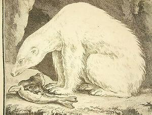 L-039-Bear-Sea-Bear-Fleece-White-Sea-Polar-Bear-Engraving-Per-Of-Seve-amp-Rousselet