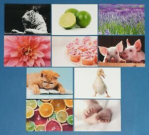 50-NEW-Mixed-Set-of-Postcards-10-designs-Postcrossing-Postcardsofkindness