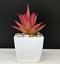 Artificial-Succulent-Plants-Small-Fake-Succulent-Bonsai-Garden-Miniature-Decor thumbnail 6