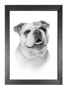 Detalles De Bulldog Retrato Póster Blanco Y Negro Mascota Cuadro Bonito Perro Dibujo