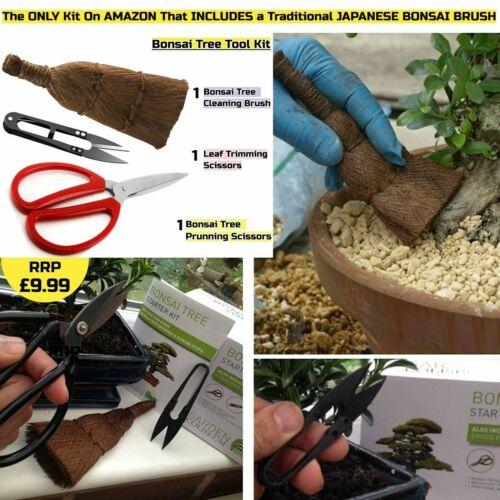 Grow 6 types seeds Gardening Gift Set plus Bonsai tools /& pots BONSAI TREE KIT
