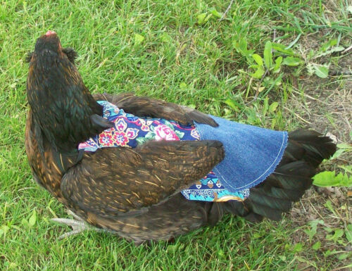 1 SUPER WIDE w TAIL CHICKEN SADDLE HEN APRON FEATHER PROTECTION HATCHING EGGS