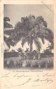 CPA-CONGO-FRANCAIS-CULTURE-DU-PALMIER-dos-non-divise