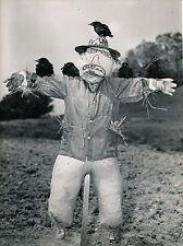 USA c. 1950 - Epouvantail Cultures Oiseaux  - DIV 9401