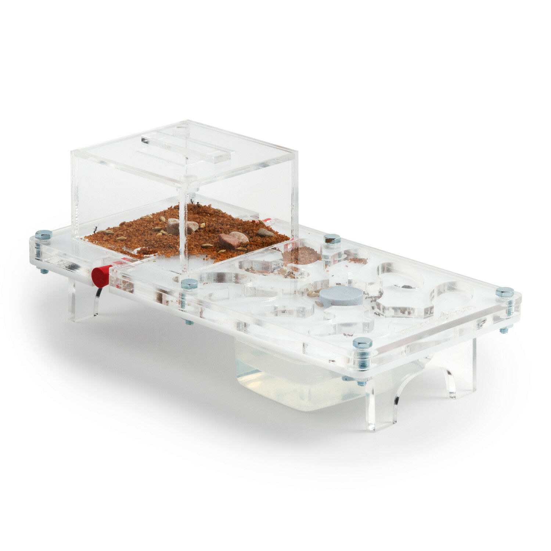 Ant Farm (Ameisenfarm) Pilz Kit (Kostenfreie Ameisen mit Königin)(Formicarium)