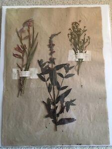 Antique Herbariums Grasses Herbier Specimens Vintage Dried Botanicals Horticulture Garden Vintage Scientific Pressed Flower