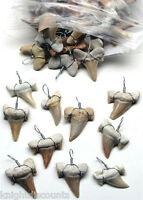 10x Shark's Teeth Pendants Genuine Real Sharks Tooth For Necklaces Bulk Lot