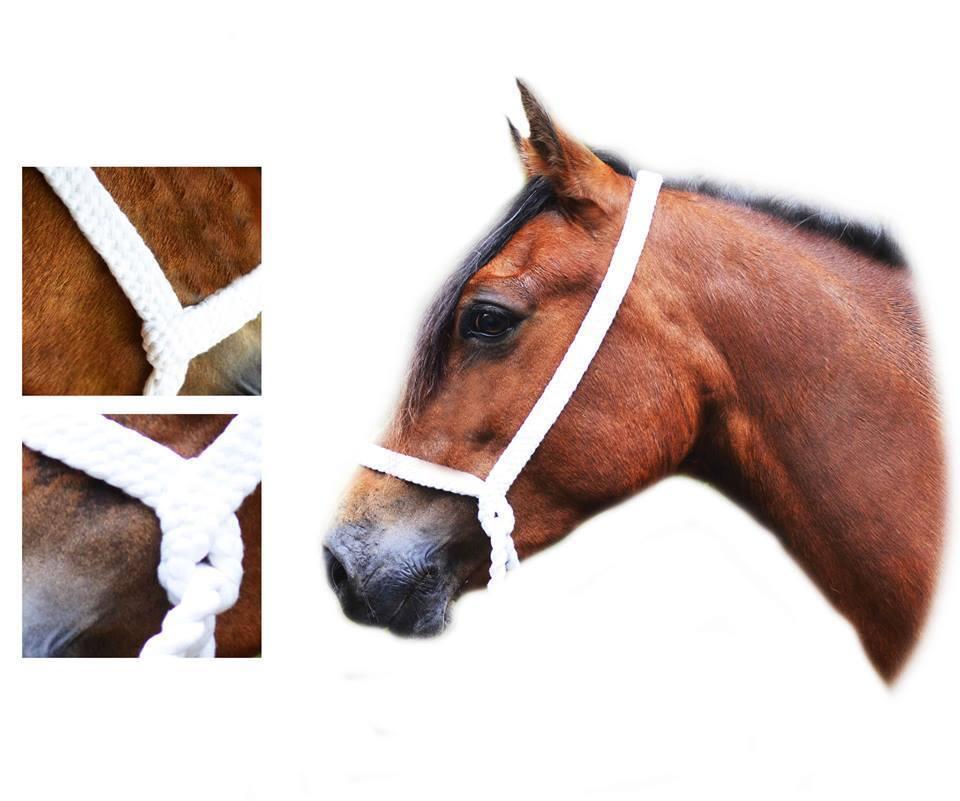 Plaited Show blanc Halter 6 strand Welsh Pony small Cob Native M + M NO RINGS