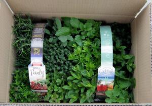 Vasi Piante Aromatiche.Dettagli Su Piante Aromatiche N 24 Vasi In 4 Pack Diversi In Vaso Diam 9cm