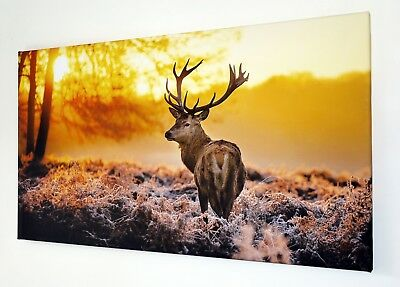 STAG YELLOW WOODLAND CANVAS WALL ART PICTURE 18 X 32 INCH FRAMED