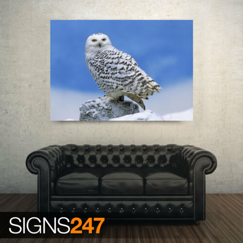Animal Poster Photo Picture Poster Print Art A0 A1 A2 A3 A4 SNOWY OWL 3561