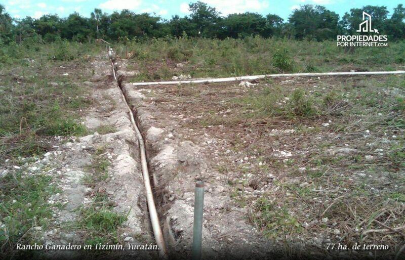 Rancho Ganadero en Tizimín, Yucatán.