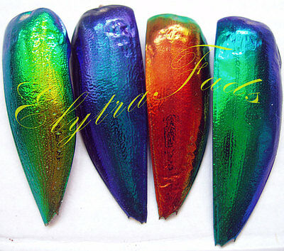 The Best of 4 colors Elytra ! Jewel beetle wings design art craft decor material
