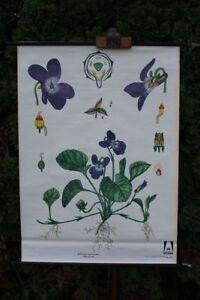 Carte-a-Rouler-Schulwandkarte-Carte-Murale-Violette-Botanique-Plante