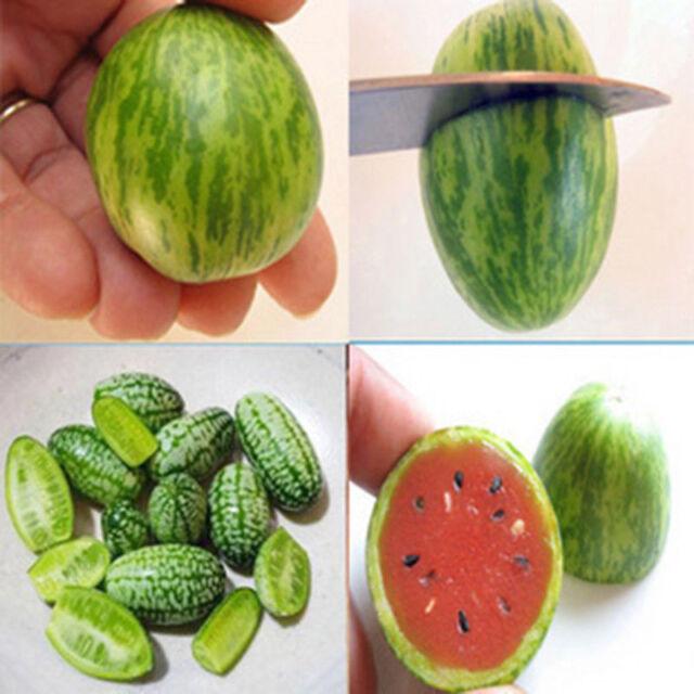 10X Cucamelon Mini Watermelon Red Miniature Seeds Fruit Plant Home Garden Dec-c