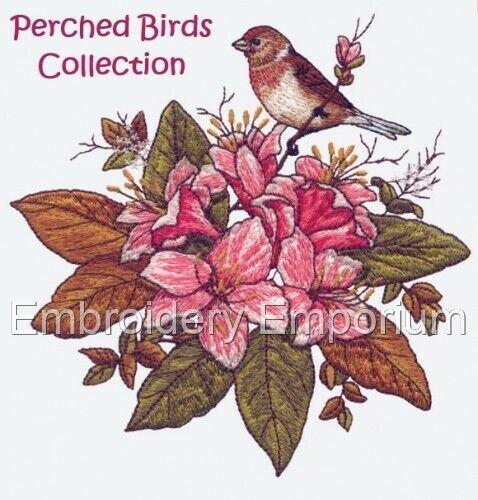 Colección De Aves posado-diseños de bordado de la máquina en CD o USB