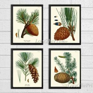 Unframed Pinecone Botanical Print Wall Art Set 4 Antique Pine Tree Home Decor