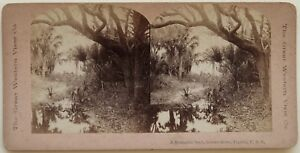 Indian River Florida USA Foto Stereo Vintage Albumina