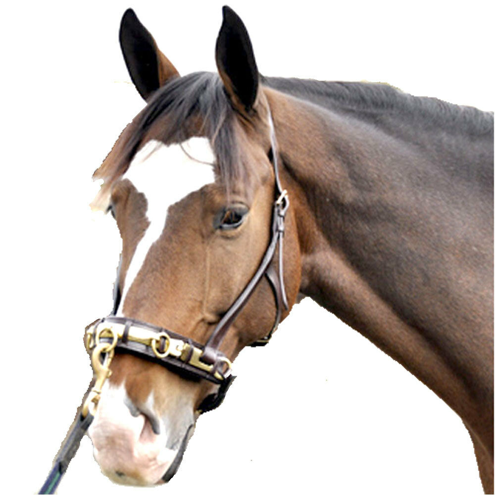 NEW Coronet Lunging Horse Cavesson - Horse Lunging Größe 2a8b15