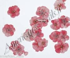 1 boite de Véritables FLEURS SECHEES Roses Corail bijoux déco d'ongles Nail Art