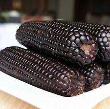 FD946 Black Tasty Corn Seeds Heirloom Vegetable Seed Popcorn Organic Non-GM 10PC