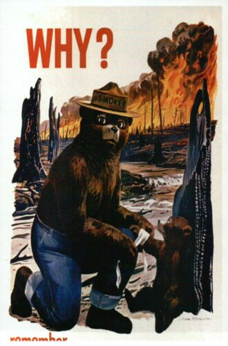 Details about  /Smokey Bear WHY ? Only You Can Prevent Wildfires Cub --- Modern Postcard Ad