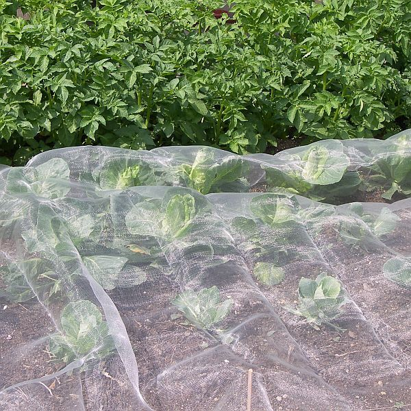 Insect Netting Garden Veggiemesh Organic Net Crop Veg Protection Various Sizes