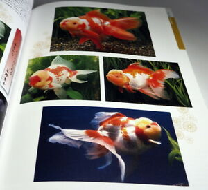 Goldfish-Breeding-book-from-Japan-Japanese-KINGYO-0955