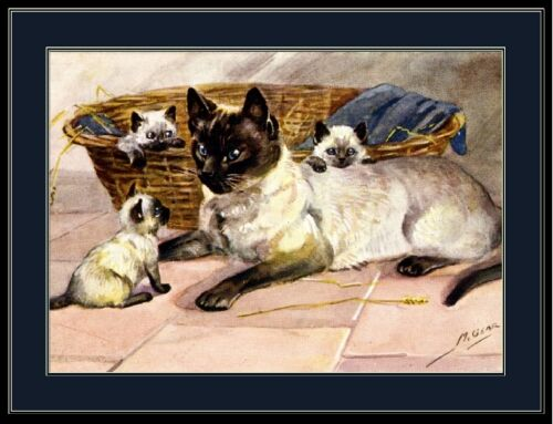 English Poster Print Siamese Cat Kitten Family Pet Art Picture