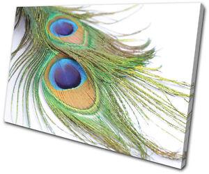 Peacock Feathers  Animals TREBLE CANVAS WALL ART Picture Print VA