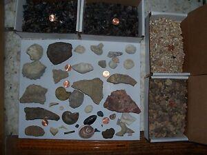 50 large ammonites 50 stingray shark teeth 100 ammonites fossil shark teeth