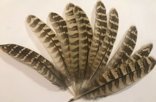 """Fly Tying Millinery 10 Hen Pheasant Right Wing Feathers 5.5/"""" 6.5/"""""""