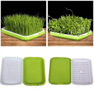 diy weizengras organisch home growing set samen erde tablett wei e pflanzschale ebay. Black Bedroom Furniture Sets. Home Design Ideas